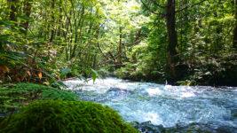 木漏れ日と陰影が美しい油川