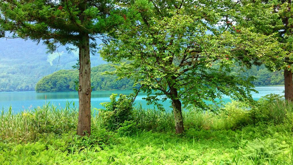 新緑を思わせるシダの緑と青木湖