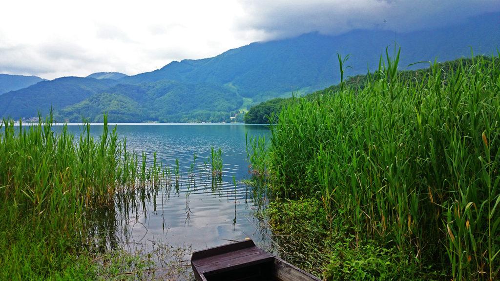 アシの茂みの間の青木湖