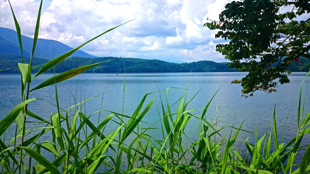 アシの茂みから見る青木湖