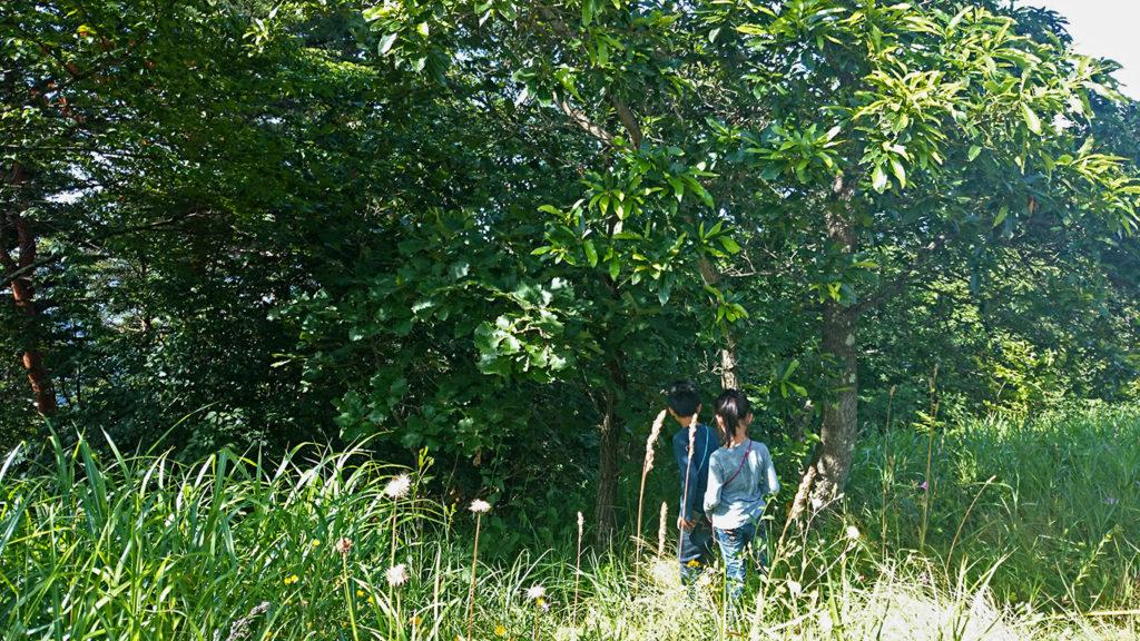 クヌギの木を探索するチビッ子たち