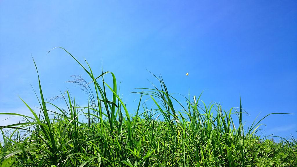雑草が生い茂る土手から夏の空を