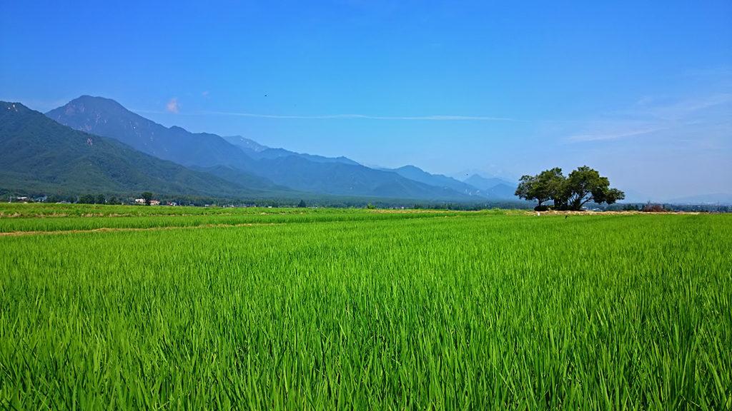 巾上の郷から青々と茂る田んぼと有明山を