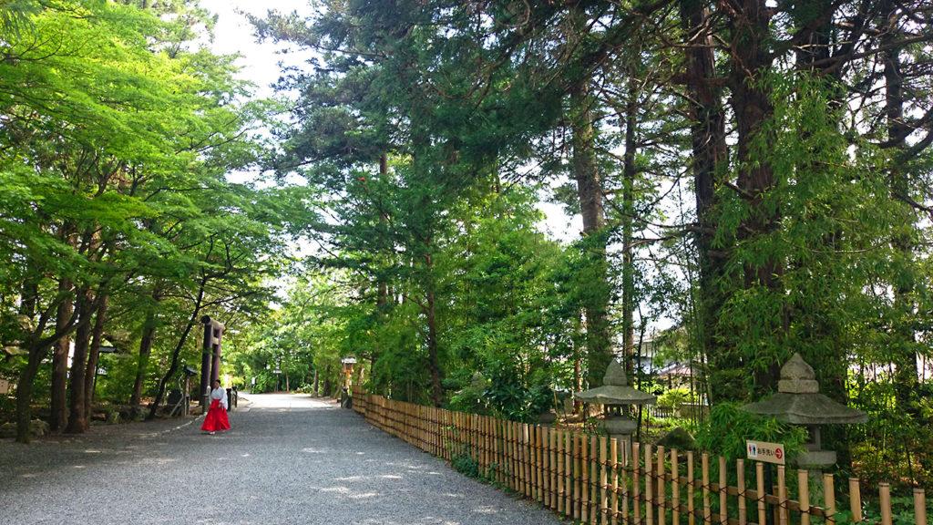 穂高神社境内の緑と巫女さん