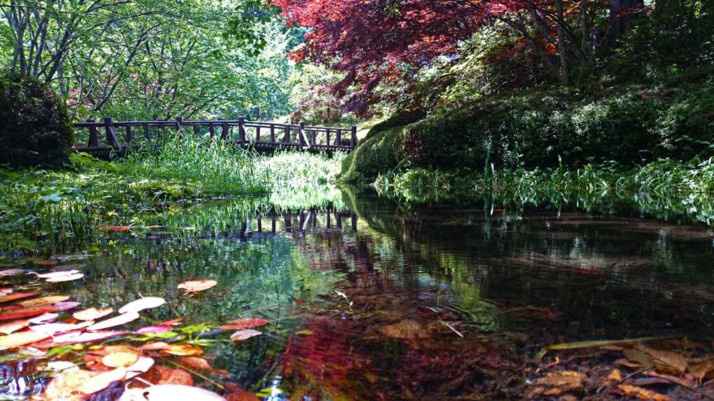 満願寺の池