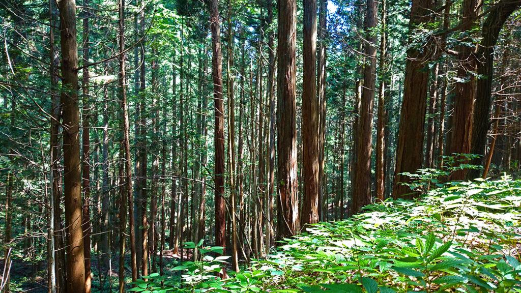 三郷スカイラインの木漏れ日