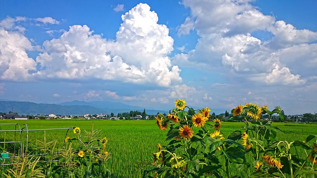 入道雲と田んぼとヒマワリ