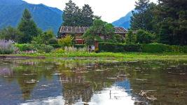 夏のこの時期に、小麦が刈り取られ、水が張られていた曽根原家住宅前の田んぼ