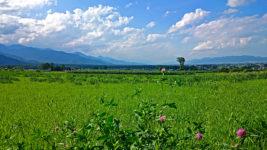アカツメクサの花と一緒に草原と夏の空を