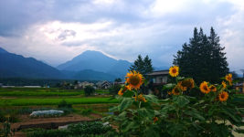 夕方のヒマワリと有明山の風景
