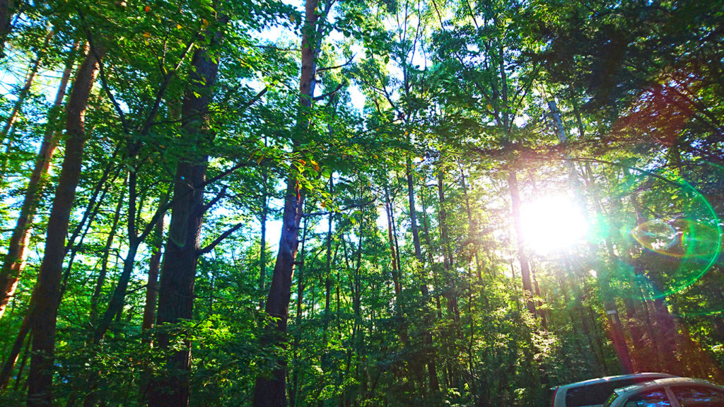 林の木々の間から差し込む朝日