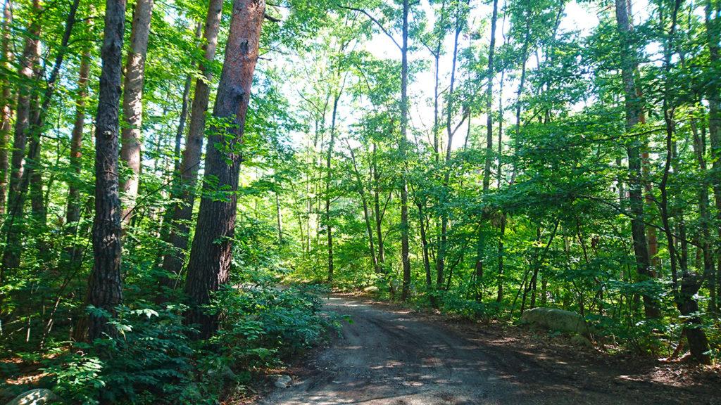 木漏れ日の林の中の小道