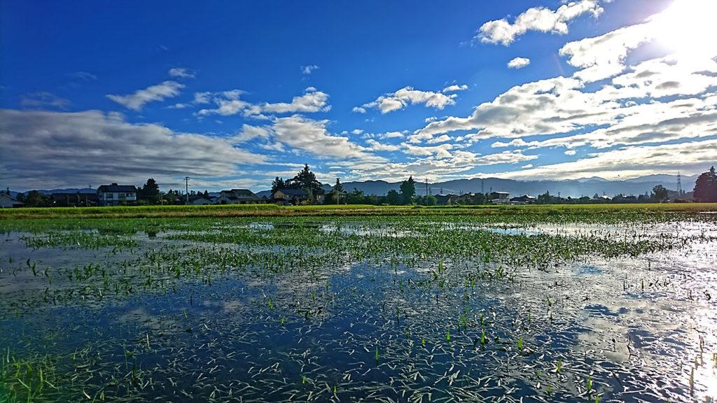 調整水田の水草と秋っぽい感じのする空