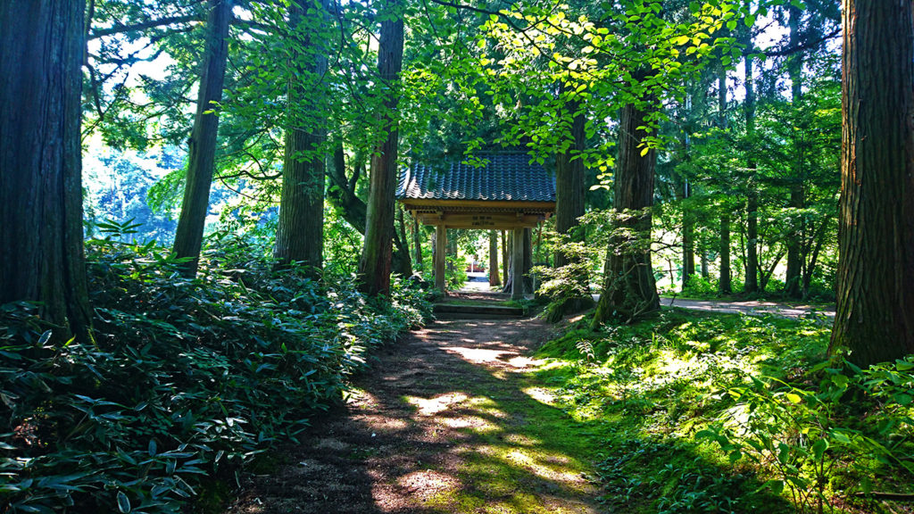 青原寺の木漏れ日