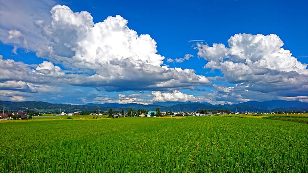 田んぼと積乱雲