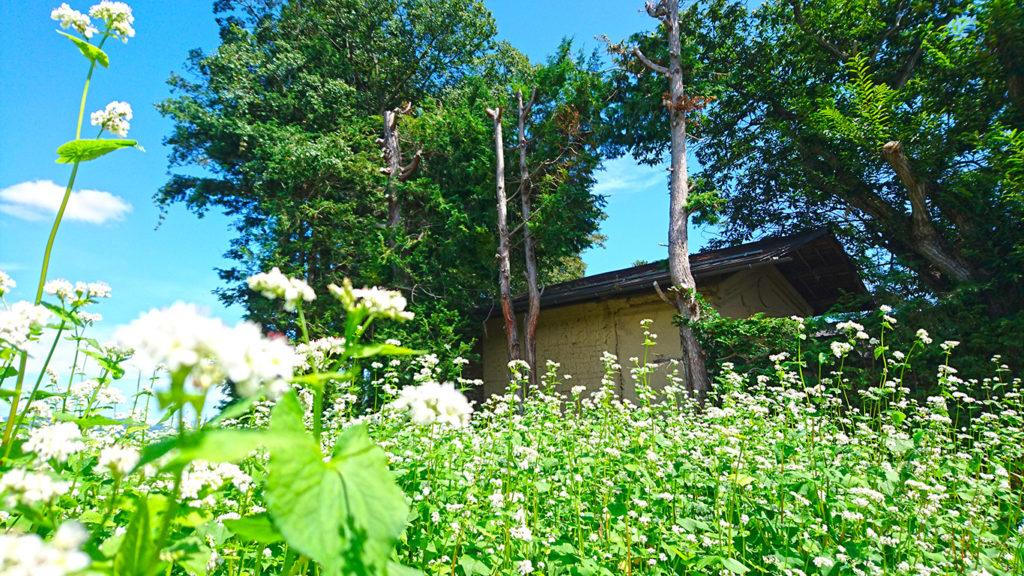 蕎麦の花と土塀の蔵