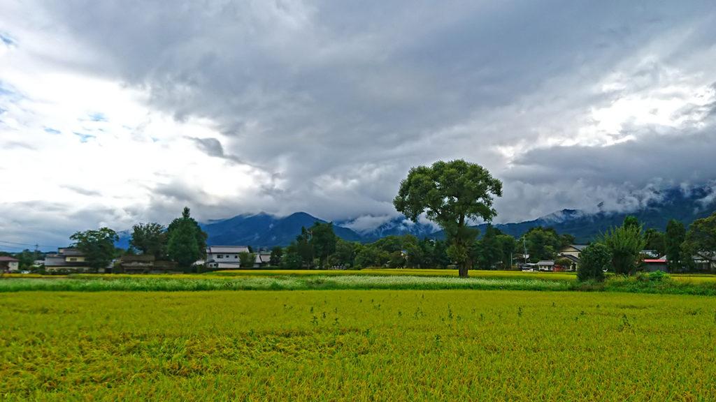 小雨の田んぼと蕎麦畑