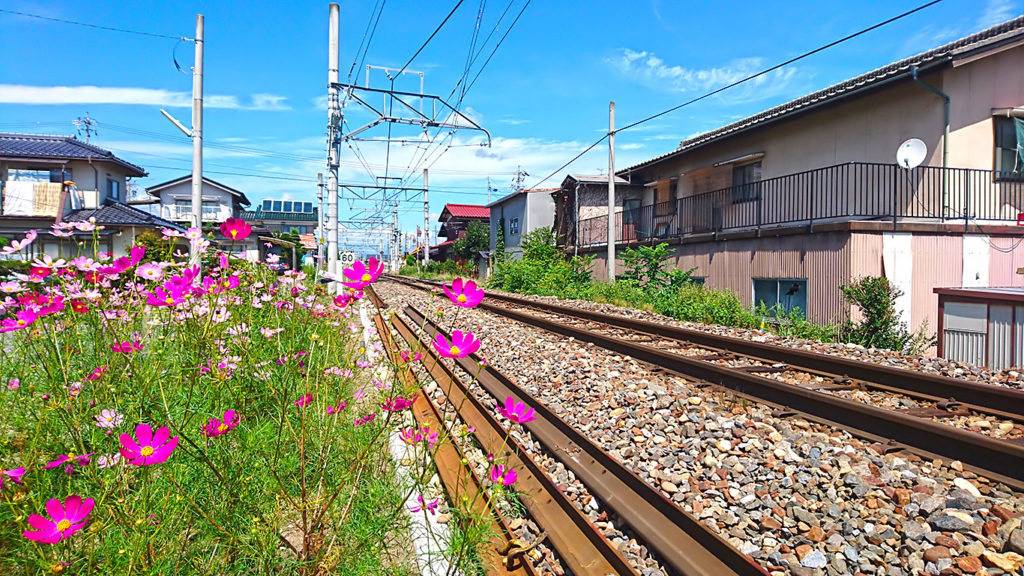 コスモスの花が咲く大糸線
