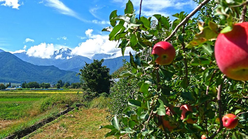 リンゴとお山(常念岳)