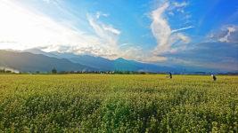 花盛りの蕎麦畑
