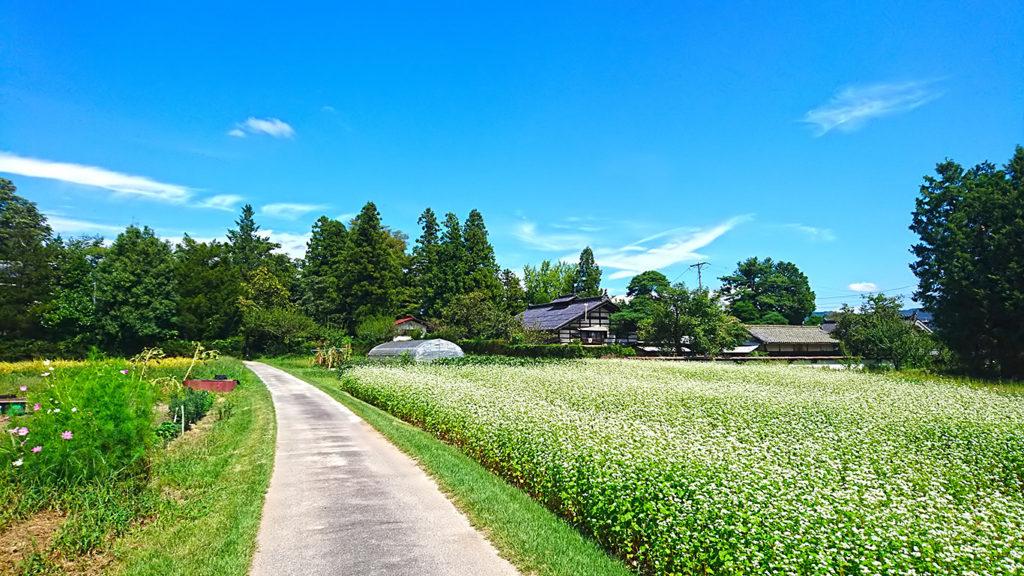 古民家と蕎麦の花咲く道