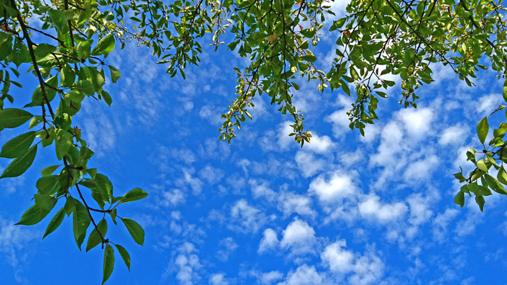 木陰に寝転んで見上げる秋の空