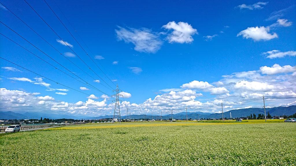 三郷の住吉交差点界隈の蕎麦畑と田んぼ