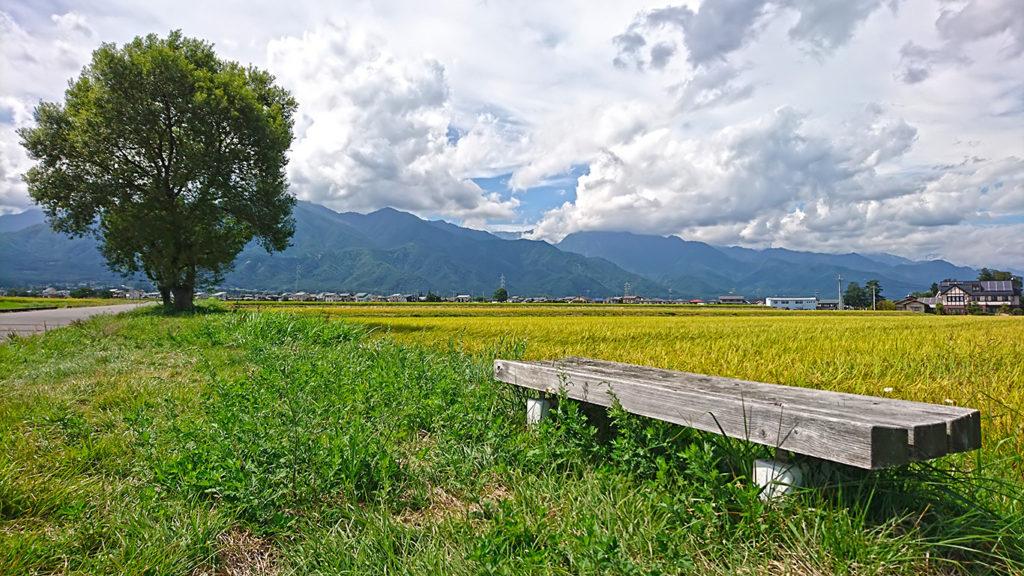 田んぼと柳の木とベンチ