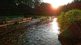 夕日に煌めくわさび田の用水路