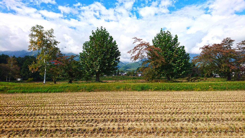 遅れている有明の森保育園横の紅葉