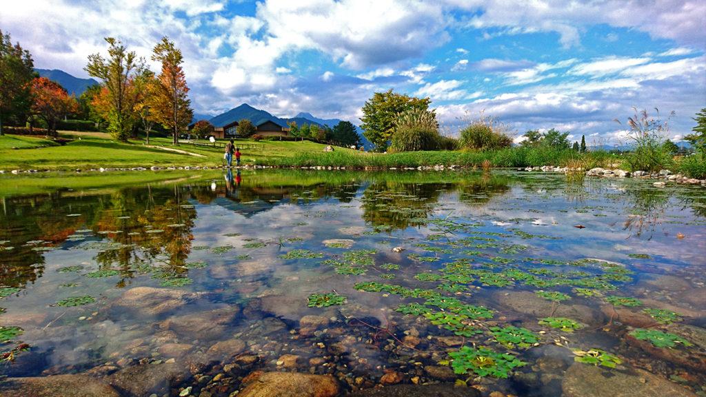 色付き始めた安曇野ちひろ美術館の庭をヒシが浮く池から