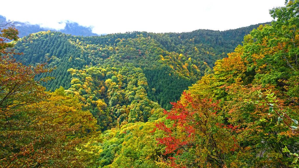 烏川渓谷紅葉状況3