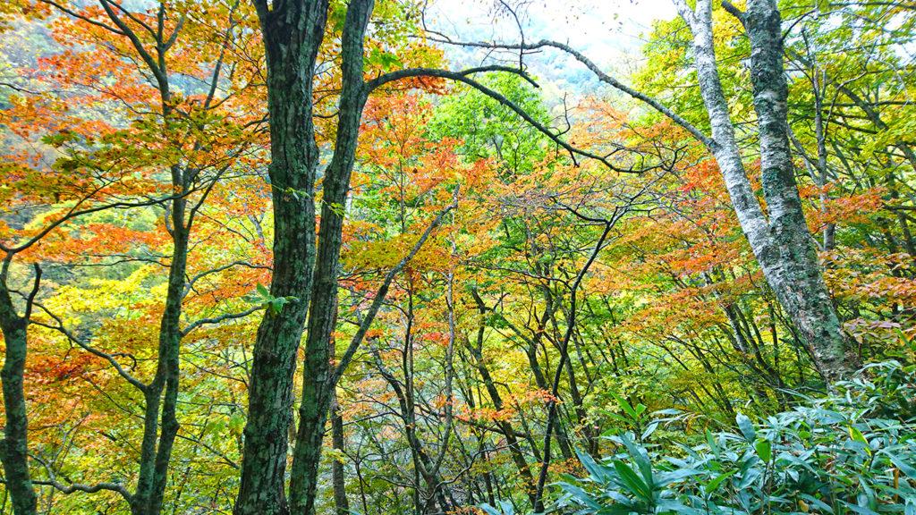 烏川渓谷紅葉状況2