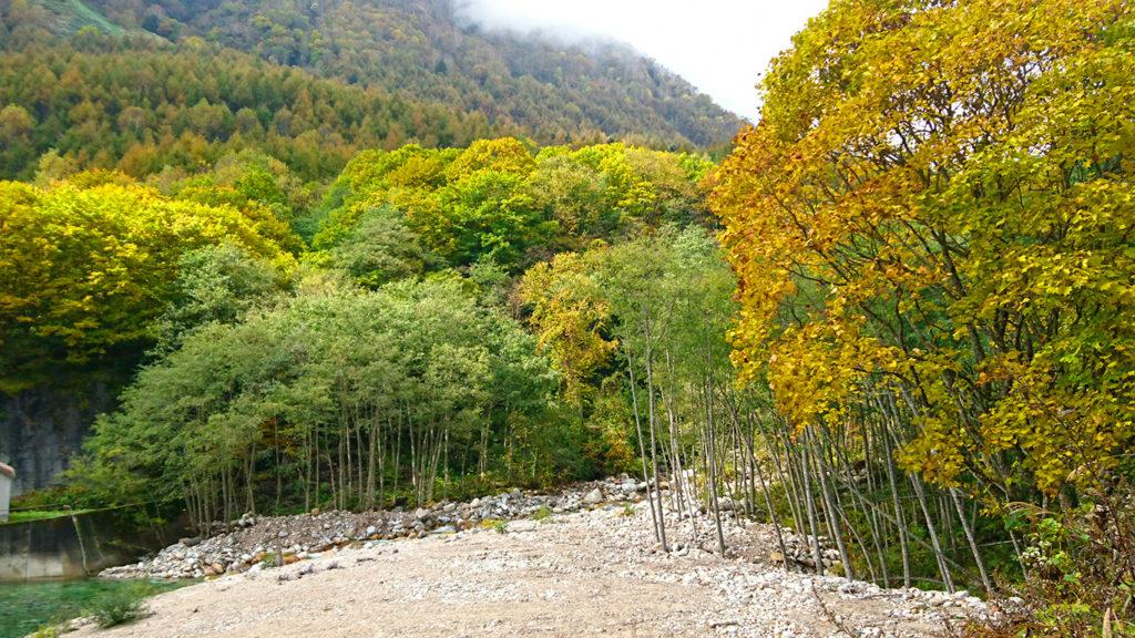 烏川渓谷紅葉状況5