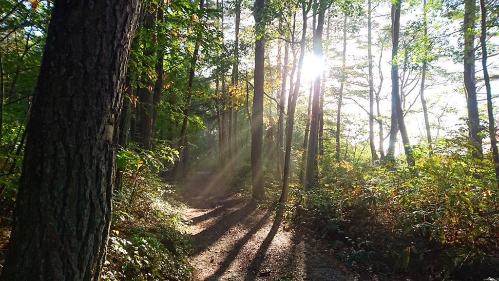 林の中に差し込む薄明光線