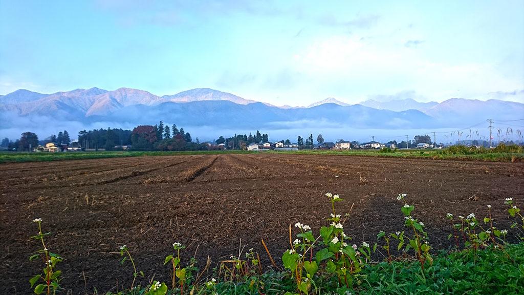 蕎麦の花と層雲