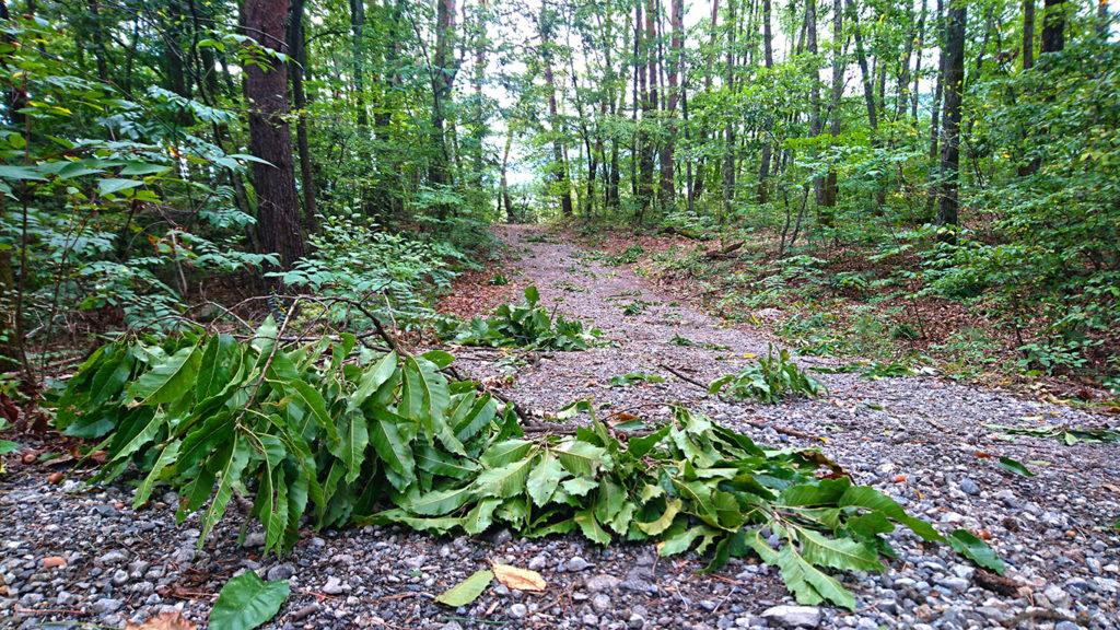 台風の強風で、林の中の小道は落ちてきた木の枝だらけ。