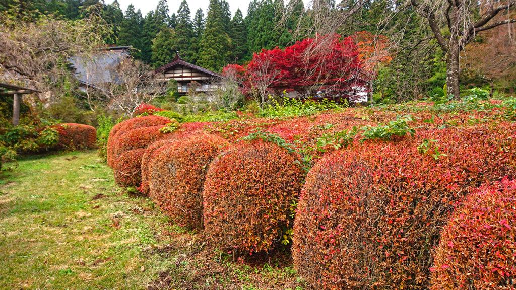 満願寺 ツツジとカエデの紅葉