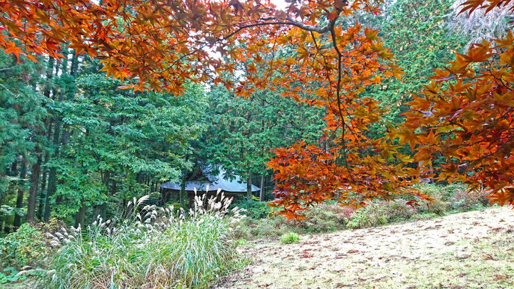 満願寺 まだオレンジ色のカエデの葉とススキ