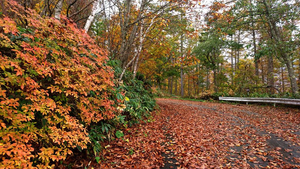 落葉に埋もれる三郷スカイライン