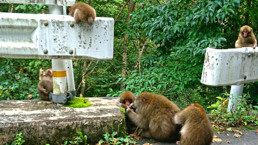 中房に上がる道沿いのお猿