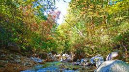 少しだけ色づき始めた中房川の木々