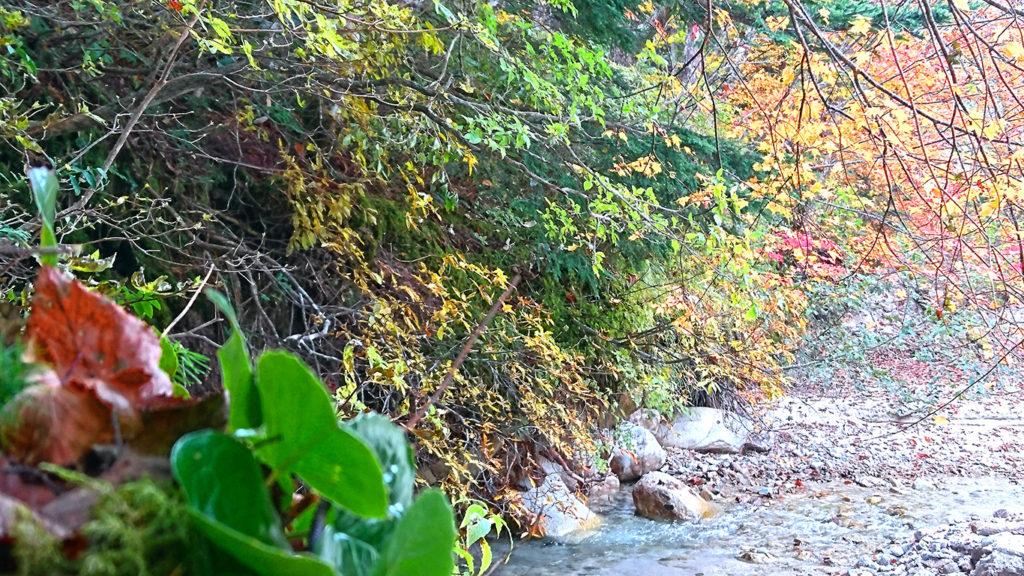 中房川の白い川砂とカエデ