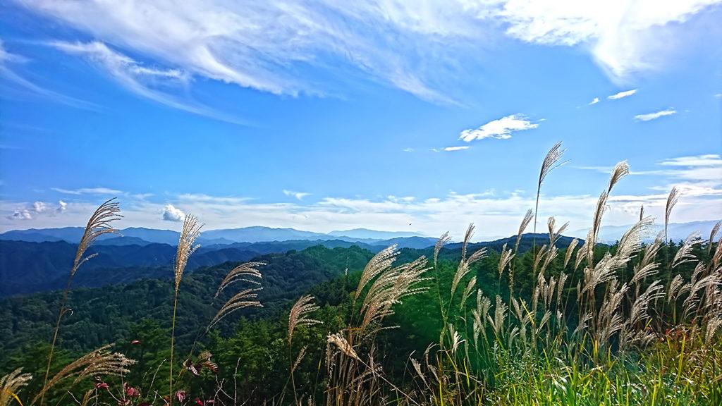 大峰高原に向かう道沿いのススキと秋の空