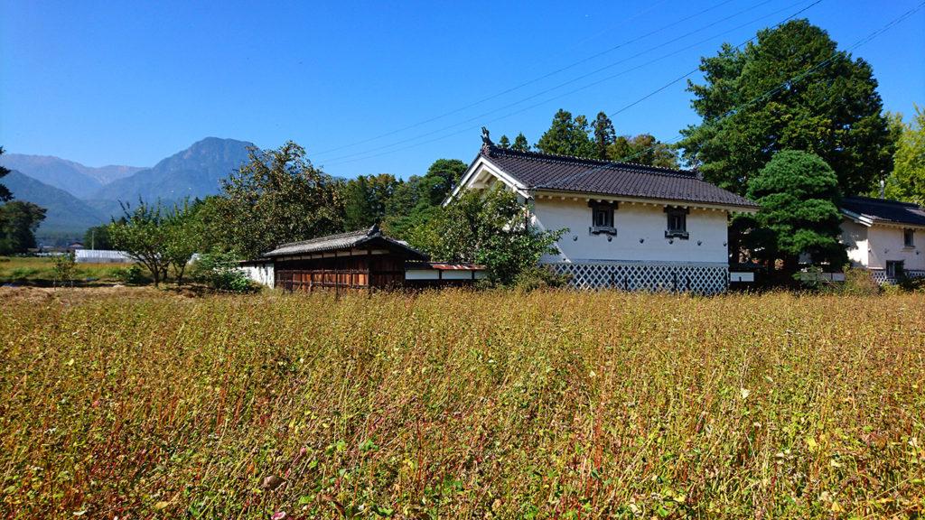 赤沼家前の色づいた蕎麦畑