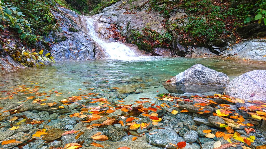 七倉ダム近くの小さな滝壺に浮く落葉