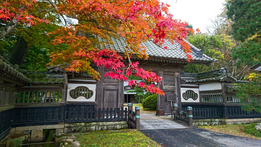 大庄屋山口家の門の前のカエデの紅葉1