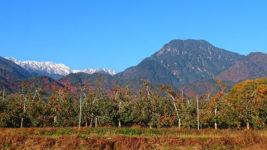 白くなった大天井岳・有明山・リンゴ