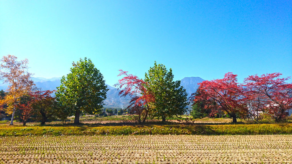 有明の森保育園横の紅葉