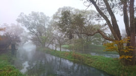 霧に包まれる大王わさび農場水車小屋1